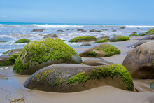 A Seascape With Moss Covered Rocks On California Coast