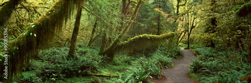 Spoed Foto op Canvas Weg in bos Hoh Rainforest, Olympic National Park, Washington