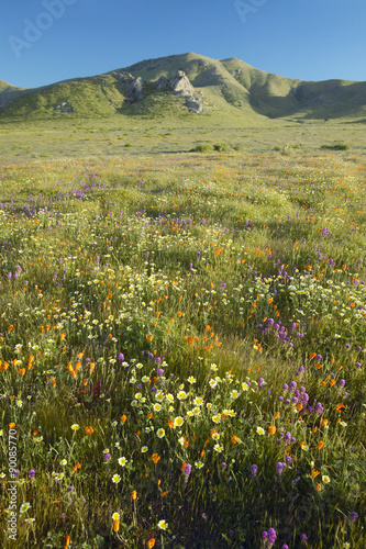 Fotografía  Bright spring yellow flowers, desert gold and California poppies near mountains