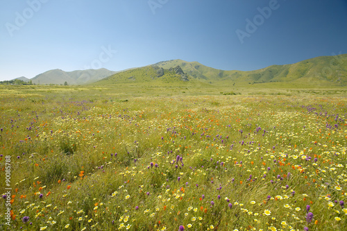 Fotografia, Obraz  Bright spring yellow flowers, desert gold and California poppies near mountains