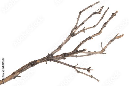 Fotografía  Dry tree branch