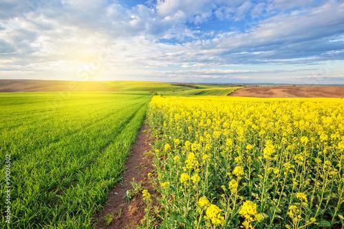 Aluminium Prints Yellow Beautiful sunny landscape