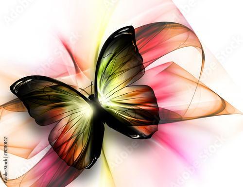 Fototapeta beautiful butterfly