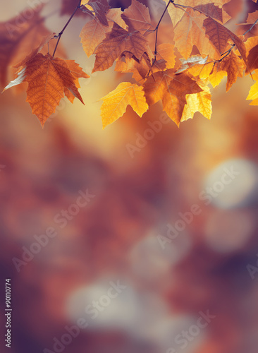 Fotografie, Obraz  Autumn background