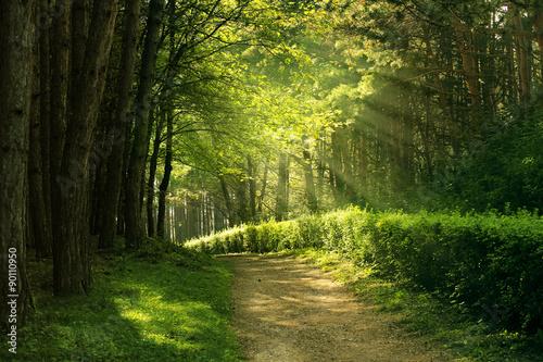 Poster de jardin Route dans la forêt summer forest
