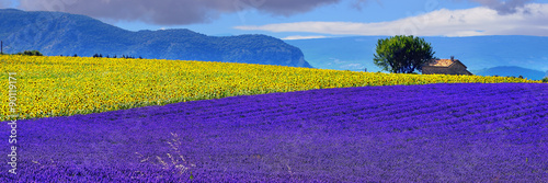 Canvas Prints Violet Provence rural landscape