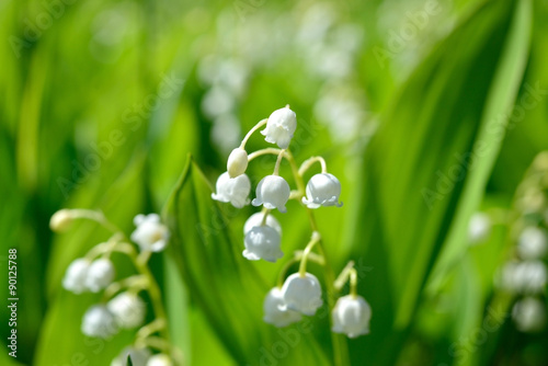 Fototapety, obrazy: lily of the valley