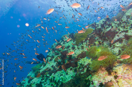 Tropical Fish on Coral Reef for diving at South West Pinnacle on