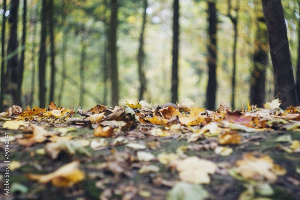Fototapeta autumn ground