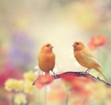 Yellow Birds In The Garden