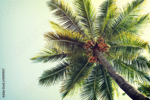 Foto auf AluDibond Palms Vintage nature background of coconut palm tree on tropical beach blue sky with sunlight of morning in summer, retro effect filter