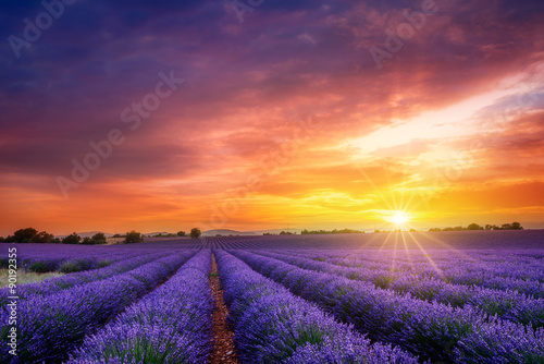 Garden Poster Lavender Sunset à Valensole