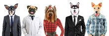 Series Of People With Animals Head
