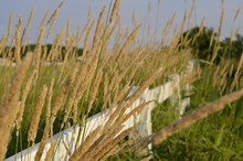 White Country Fence Dividing Pastures And Fields