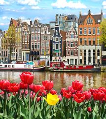 Prekrasan krajolik s tulipanima i kućama u Amsterdamu, Nizozemska