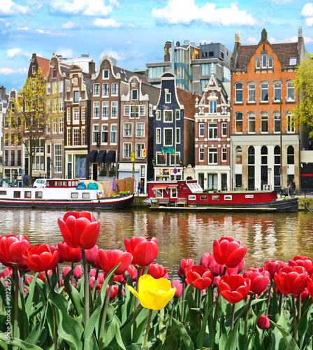 Obraz Beautiful landscape with tulips and houses in Amsterdam, Holland - fototapety do salonu