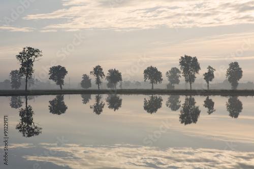 Foto  Bäume dachten über das Paddyfeld an der Dämmerung nach