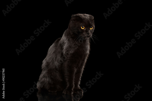 Fototapety, obrazy: Black Cat Sitting on Mirror and Grumpy Looking