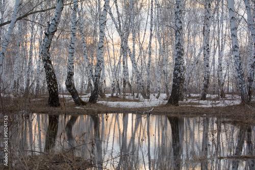 Photo sur Toile Bosquet de bouleaux Белые березы в березовой роще весной отражаются в талой воде