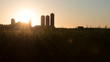 The rising sun bursts forth over the barn and silos of a farm while hitting the tassels of corn (maize) plants in a field.