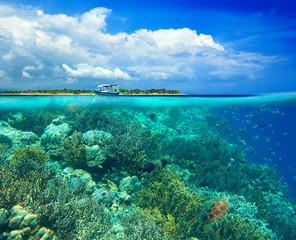 Coral reef on background. Underwater scena