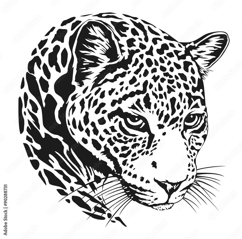 leopard bilder zum ausmalen  malvorlagen