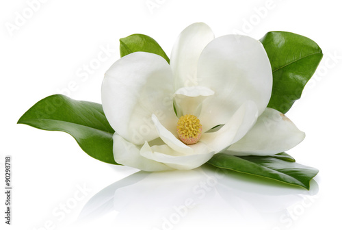 Photo sur Aluminium Magnolia White magnolia