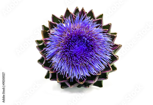 Blooming artichoke on white with clipping path
