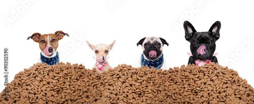 cztery-glodne-psy-i-stos-ze-smakolykami