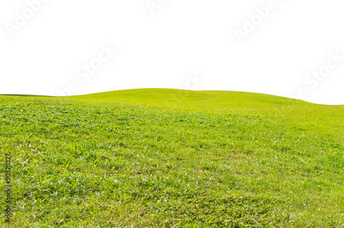 Poster Lime groen green field isolated