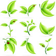 Leinwandbild Motiv Fresh Green Leaves Icon Set