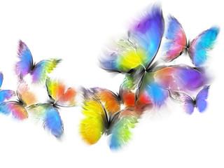 Fototapeta Motyle butterflies
