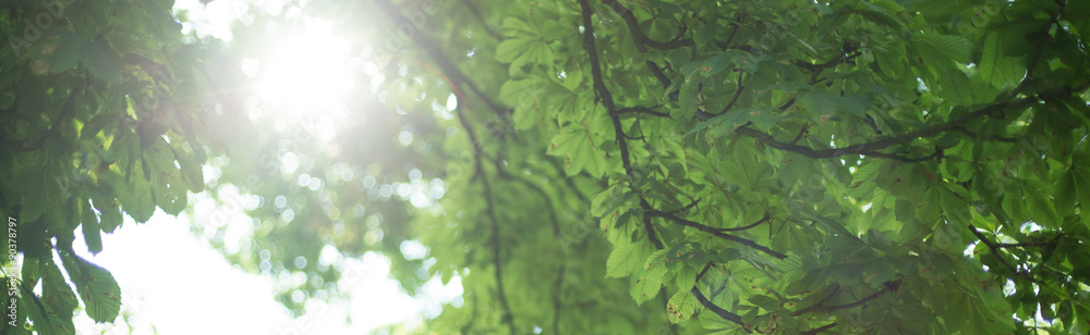 Tree leafs on sunny day