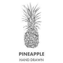 Sketch Of Pineapple. Hand Drawn Vector Illustration. Fruit Colle