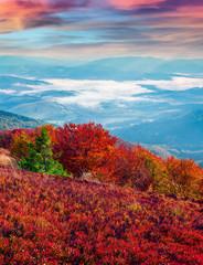 Panel Szklany Góry Fantastic colors autumn landscape in the Carpathian mountains.