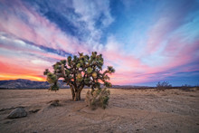Sunset At Mojave