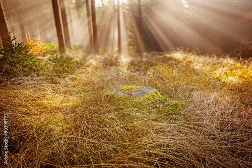 zroszona trawa w porannym lesie