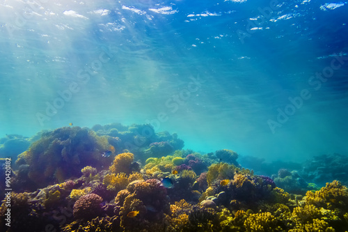 In de dag Onder water Coral and fish in the Red Sea, Egypt