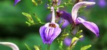 Flore De La Réunion