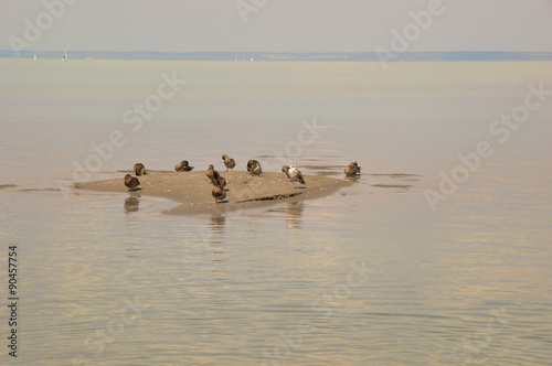 Poster Nautique motorise Wild ducks and seagulls on the sand dune in the lake