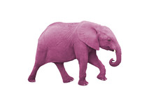Pink Elephant Isolated On A White Background