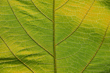 Close up on yellow leaf texture