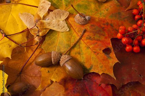 Valokuva  Autumn background, leaves, acorns, ashberry