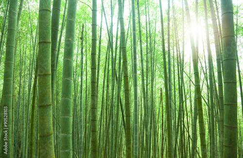 Deurstickers Bamboo green bamboo forest with sunlight