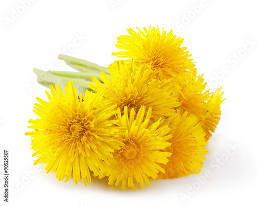 Fotografie, Obraz  Dandelion isolated on white background