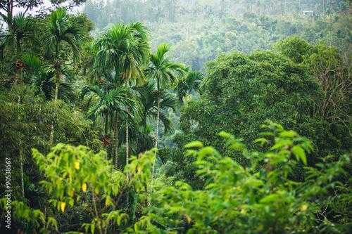 dzungla-tajlandii
