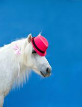 Pony Mit Hut