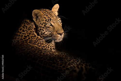 Papiers peints Panthère Leopard lay down in darkness to rest and relax