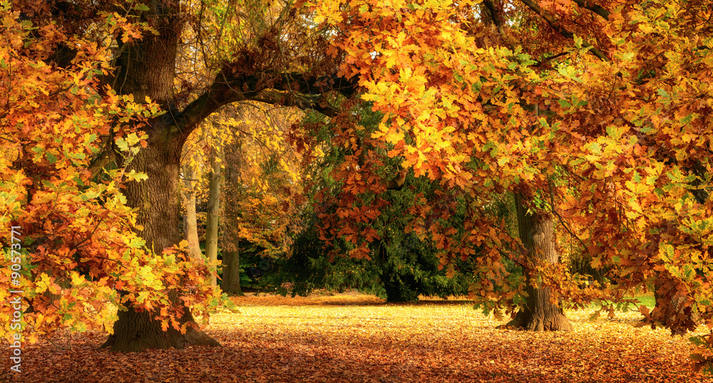 Fototapeta Autumn scenery with a magnificent oak tree