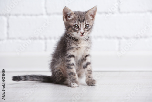 Foto op Aluminium Kat Cute gray kitten on floor at home